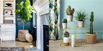 室内养什么植物好 推荐12种最常见的室内绿植